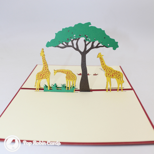 This charming card has a 3D pop up design showing three giraffes grazing together at a tree on a savannah. The cover also has a stencil design showing the same scene.
