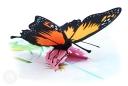 Monarch Butterfly In Meadow Handmade 3D Pop-Up Card #2881