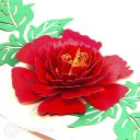 Mudan Peony 3D Pop Up Card with Traditional Painting Cover  1986