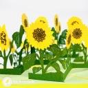 Patch Of Sunflowers Handmade 3D Pop Up Card #3653