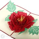 Peony Flower 3D Pop-up Greetings Card (Red Cover) 1431